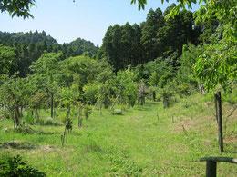 緑豊かになりました。第1樹木葬地