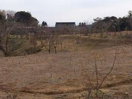 拡張された 第二樹木葬地から本堂を臨む
