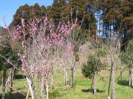 花々がほころび出しました。第一樹木葬地