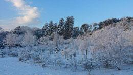 房総半島にも雪が積もりました。展望台から見た樹木葬地
