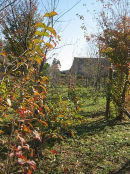 房総はこれから紅葉です。樹木葬地から本堂を臨む