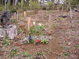埋葬地、お花で飾られました。埋骨者の木札が立ちます。
