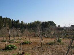 墓参の方々が植えた草花で彩られる第三樹木葬地