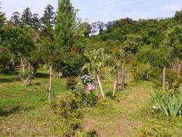 木々がいっせいに枝葉を伸ばし出しました。第二樹木葬地