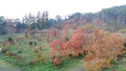 天徳寺第二樹木葬地