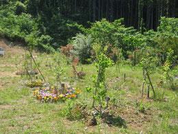 新しい苗木も若葉を出しました。第3樹木葬地