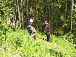 あちこちに散って、竹の子掘りに悪戦苦闘