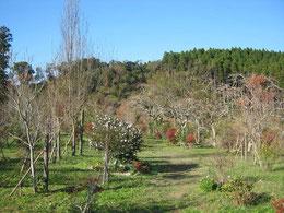 暖かな日が続きます。第二樹木葬地