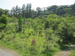展望台から望む第2樹木葬地。