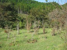 二つの台風が通過しましたが、木々は無事でした。第一樹木葬地