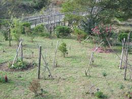 新しい休憩所から臨む第一樹木葬地