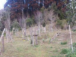 今年の冬は雪もなく終わりそうです。第一樹木葬地