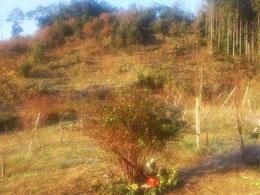 紅葉が綺麗です。第三樹木葬地