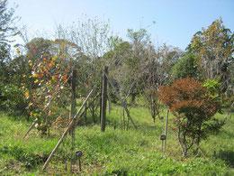 雨の多い月でしたが、久しぶりの晴天です。第二樹木葬地