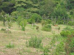 ようやく草刈りも一回り終えました。第三樹木葬地