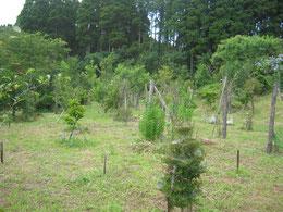 7月の第一樹木葬地