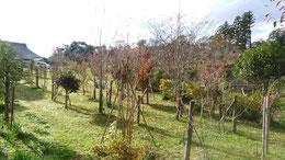 朝日さす樹木葬地。