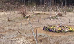 植えられたパンジーが彩る第三樹木葬地
