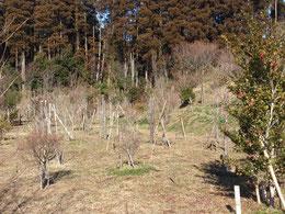 天気の良い日が続きます。第一樹木葬地