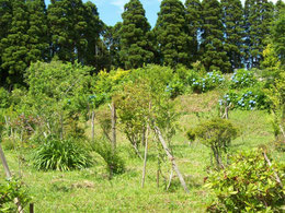 あじさいの咲く第一樹木葬地