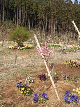 小さな苗木も頑張って花をつけました。第三樹木葬地