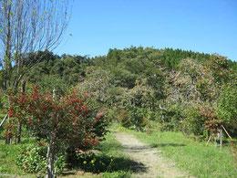 柿やウメモドキが沢山実っています。第二樹木葬地