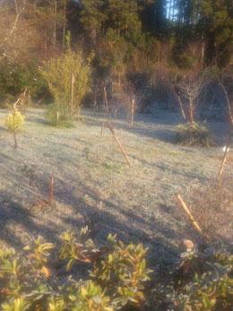 朝霜で凍る第一樹木葬地