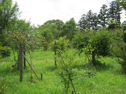 蝉の声がにぎやかになりました。第二樹木葬地