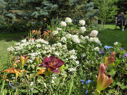 Hydrangeas and daylilies