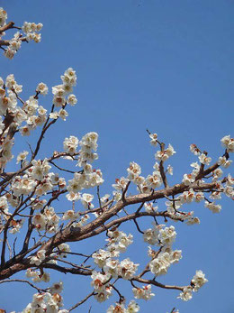 え!桜?そんなことはないよね。へへへ
