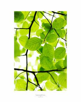 Schmetterling, Naturfotografie, Sabine Grill