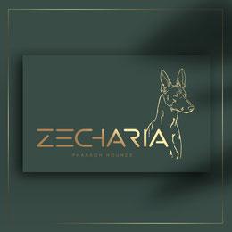 creative dog pet logo; luxury zoo grooming salon logo; zoo house Dyubua logo; best creative luxury logo ideas dogs cats pets; order luxury logo online; Kiev; Ukraine; PRS LA BEAUTY;