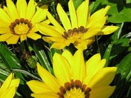 So wie sich die Blume dem Licht hinwendet, braucht der Mensch das Licht zum Leben. Reiki bringt dieses Licht wieder in dein Leben zurück und lässt es strahlen, zum Wohle aller...