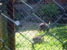 oder ein Besuch im tierpark im Ostharz