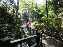 武蔵国分寺公園の南側にある国分寺崖線(はけ)の坂を下ると写真の「お鷹の道」があり、湧水の流れに沿って歩くと、ラリーポイントの「おたカフェ」に到着です。