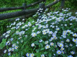 ●名前のわからない花です