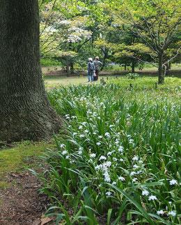 中は新緑の世界。花木の楽園です!