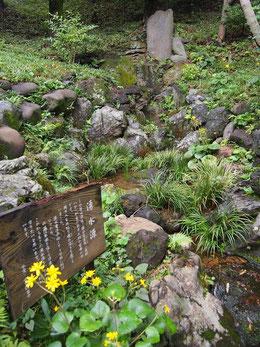 ●湧水の源です。池に流れて行きます