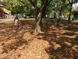 ●府中の森公園。桜の木の落ち葉にこもれびがきれいでした。