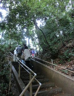 ●湧水の湧く斜面(国分寺崖線)の階段を上ると武蔵国分寺公園に到着します