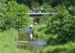●野川では魚とりを楽しむファミリーも。