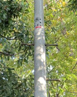 ●標のようなものは、「すいしゃくん」でした。高さ4.6mのところに標があるのです。