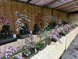 ●サービスセンターの近くでは、「小菊盆栽展」が行われていました。殿ヶ谷戸庭園は、駅のすぐ近くにこんな野趣あふれる空間があることが不思議に感じるようなところ、こころが洗われるような場所でした。次は、史跡の駅「おたカフェ」に向かいます