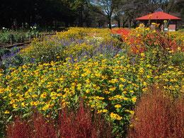 ●江戸東京たてもの園のある小金井公園の花壇。秋の草花でにぎやかでした。