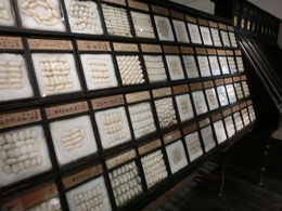 ●繭の標本コレクション(農工大科学博物館)