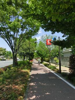 神代植物公園からは、自転車で武蔵境通りを北上。自転車専用レーンがあるので快適です