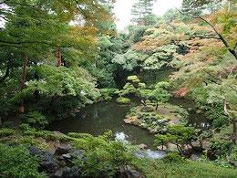 ●次郎弁天池です。紅葉亭と池が国分寺崖線(はけ)の上下になっているのですね