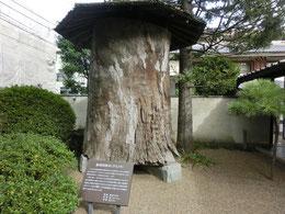 日本近代彫刻界の巨匠、平櫛田中(ひらくしでんちゅう)の終焉の館を保存し、展示館を併設した「小平市平櫛田中彫刻美術館」。敷地内には、推定樹齢500年の彫刻用クスノキの原木があり、びっくり。