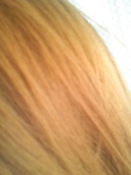 髪の表面(ビフォー)