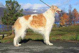 Züchter Barsois und Scottish Deerhounds Nadja Koschwitz/Rheinland-Pfalz/Bauler